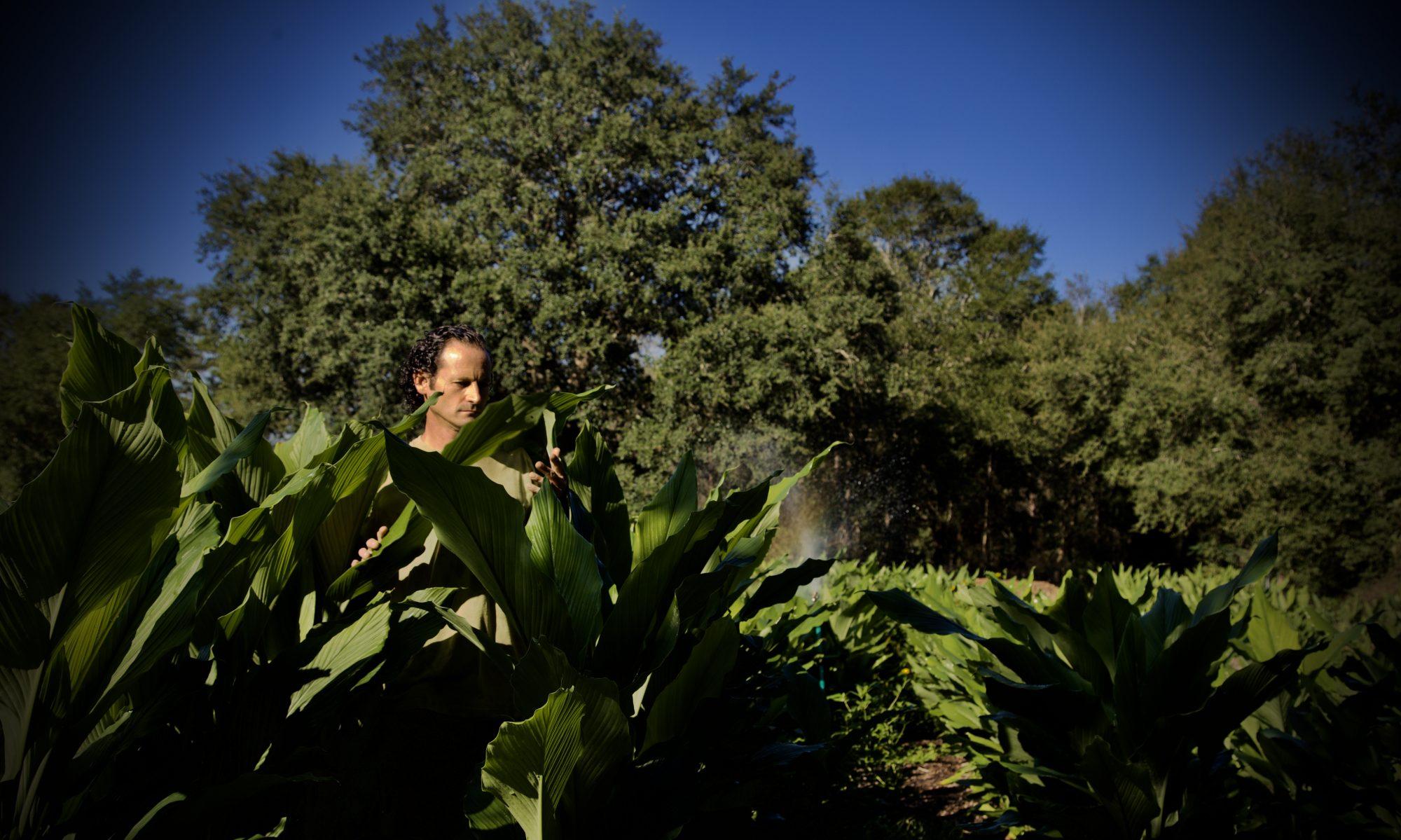 The Greenman's Garden
